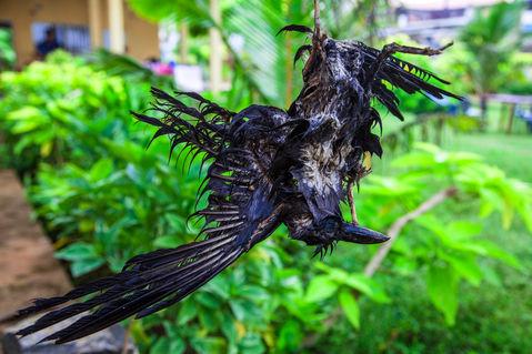 Death-raven