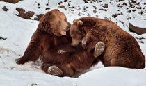 Little soft bears by Barbara  Keichel