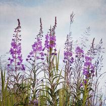 Yukon state flower von Priska  Wettstein