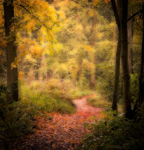 The path in the woods by Paul Davis
