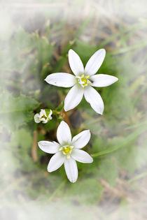 Frühlingstraum - spring Dream von ropo13