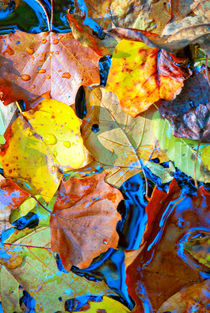 Leaves of Autumn by Jamie Starling