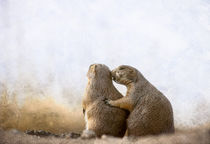 Prairie Dog Love by Barbara Magnuson & Larry Kimball