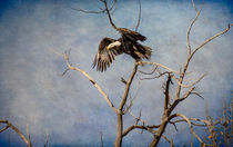 Eagles Soar von Barbara Magnuson & Larry Kimball