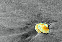 Seashell in the Sand  by Jamie Starling