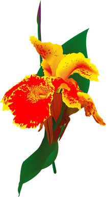 Exotische Blüte von Gina Koch