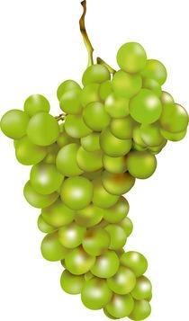Grüne Weintraube von Gina Koch