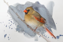 Winter Northern Cardinal von Betty LaRue