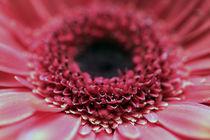 rote Blüte von Jens Berger