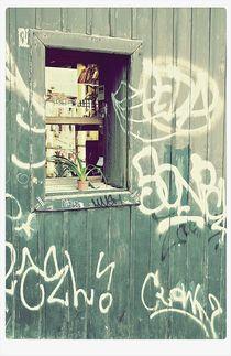 Plant on a venice window von Manuela Russo