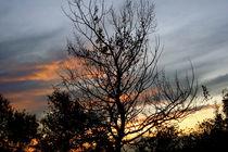 Sunset behind the tree by Ana Mazi