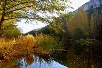 Autumn in the dam by Ana Mazi