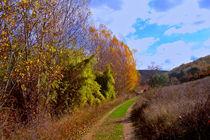 Early fall by Ana Mazi