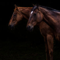 Two Horses von rwdownesphotography