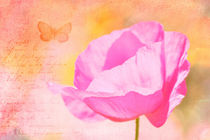 Md-pen-pink-poppy-butterfly