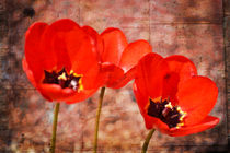 Red Tulips by Patricia N