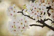 White Flowering Tree by Patricia N