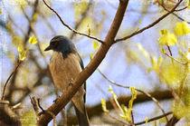 Blue Bird by Patricia N