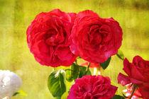 Red Roses von Patricia N