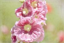 Hollyhock Flowers by Patricia N