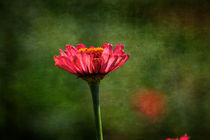 Zinnia Flower by Patricia N