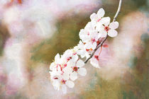 Cherry Blossom Floral by Patricia N