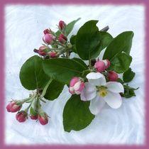 Blütentraum by Irmtraut Prien