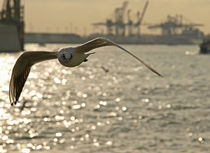 Sea gull in Hamburg by Arkadius Ozimek
