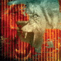 Lion-8x8