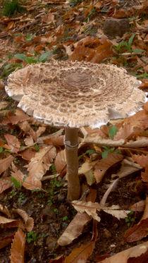 mushroom by Ana Mazi