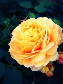 Wunderschöne Blume by leon blauth