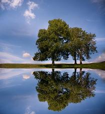 Three Trees von Paul Davis
