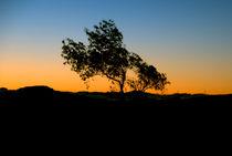 The sunset tree von Vesna Šajn