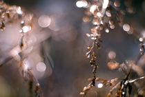 Rainy days #4 by Vesna Šajn