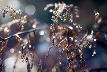 Rainy days #2 von Vesna Šajn