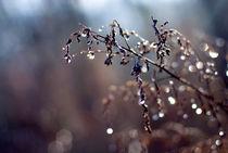 Rainy days von Vesna Šajn