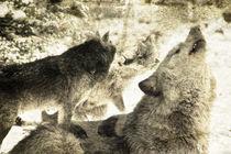 Wolfsgeheulen  von Barbara  Keichel