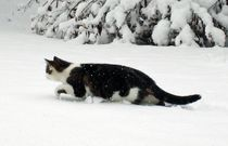Schneekatze by aidao