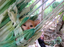 Little Cat by Ana Mazi