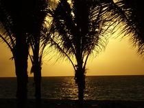Sunrise Palms, Playa del Carmen Mexico von Tricia Rabanal