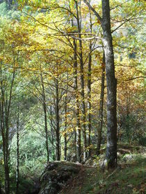 Autumn Forest, landscape Spain by Tricia Rabanal