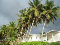 Puerto-rico-2011-220