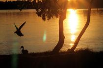 Sonnenuntergang mit fliegender Ente von aidao