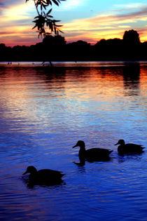 Sonnenuntergang mit Enten by aidao