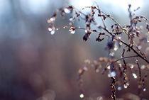 Rainy days #6 by Vesna Šajn