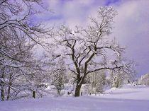 Winterbaum by aidao