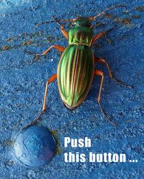 Antje Püpke . Flotter Käfer von Antje Püpke