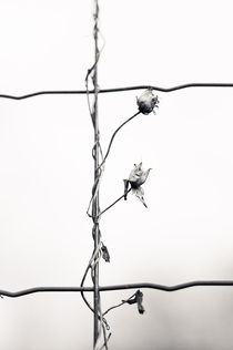 Joannasfoto-artflakes-6659