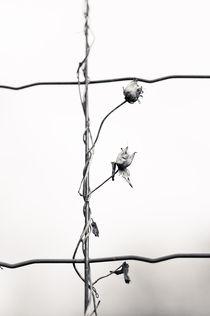 Wrapped II by Joanna Kapica