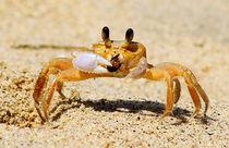 'Eating Crab' von Stefan Hafner